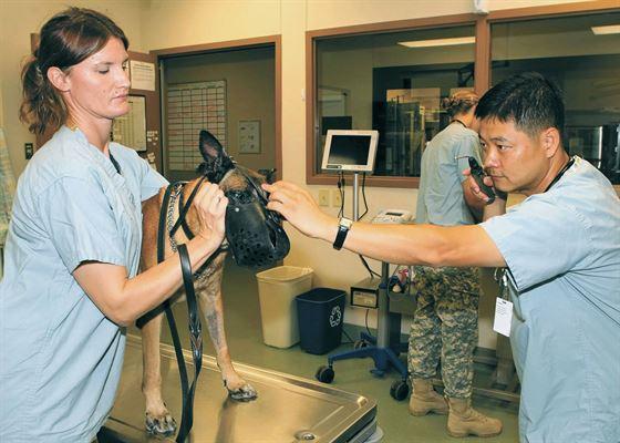 Vet SEO checking eyes of dog